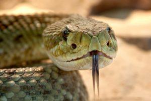Bliv inspireret af slangers konfliktløsende empatiske aggressioner